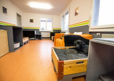 Hundehort Murgenthal